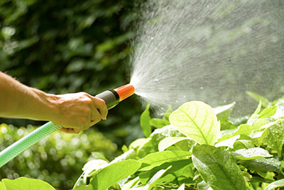 Watering your lawn in North Texas