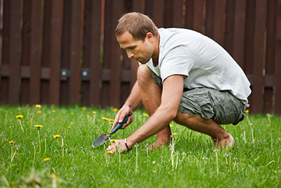 Man working in garden